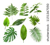 set of different tropical... | Shutterstock . vector #1151367050
