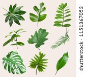 set of different tropical... | Shutterstock . vector #1151367053