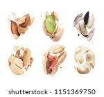 set of broken nuts and seeds... | Shutterstock . vector #1151369750