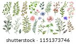 watercolor illustration.... | Shutterstock . vector #1151373746
