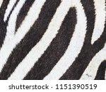 zebra skin pattern. | Shutterstock . vector #1151390519