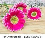 beautiful pink gerbera flowers... | Shutterstock . vector #1151436416