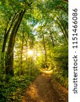 path through the forest lit by... | Shutterstock . vector #1151466086