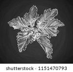 branch of rowan berry sketch ... | Shutterstock .eps vector #1151470793