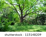 botanical garden | Shutterstock . vector #115148209