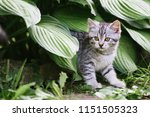 Stock photo a cute kitten is playing in the garden pet on the nature concept 1151505323