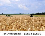 german landscape with a wheat...   Shutterstock . vector #1151516519
