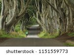 jogger at the dark hedges ...   Shutterstock . vector #1151559773