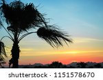 silhouette of palm tree in the... | Shutterstock . vector #1151578670