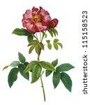 flower illustration | Shutterstock . vector #115158523