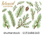vector collection of conifer... | Shutterstock .eps vector #1151686163
