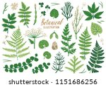 vector herb collection with... | Shutterstock .eps vector #1151686256