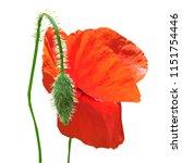 beautiful red poppy. bloom of...   Shutterstock .eps vector #1151754446