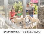 family getting to know two dogs ... | Shutterstock . vector #1151804690