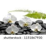 spa still life with wet pebbles ... | Shutterstock . vector #1151867930