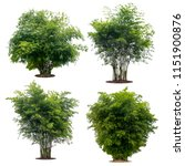 collection bamboo tree isolated ...   Shutterstock . vector #1151900876