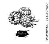 raspberry vector drawing.... | Shutterstock .eps vector #1151907500