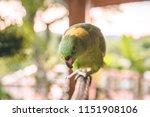 beautiful green parrot with... | Shutterstock . vector #1151908106