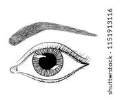 eye with brow. hand drawn... | Shutterstock .eps vector #1151913116
