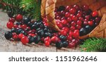 fresh cranberry and chokeberry... | Shutterstock . vector #1151962646