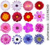 Selection Of Various Flowers...