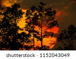 tree at sunset background   Shutterstock . vector #1152043049