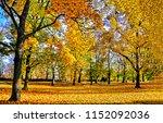 autumn forest park landscape....   Shutterstock . vector #1152092036