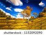 lonely autumn birch tree on... | Shutterstock . vector #1152092090