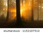 sunbeams in beech forest ... | Shutterstock . vector #1152107513