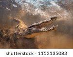 Saltwater Crocodile Underwater...
