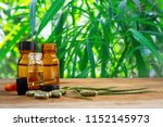 marijuana leaves extracted from ... | Shutterstock . vector #1152145973