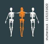 human skeleton standing and... | Shutterstock .eps vector #1152151820