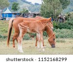 mother horse with foal eating... | Shutterstock . vector #1152168299