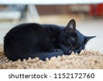 a sleeping black cat lay on... | Shutterstock . vector #1152172760