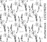 seamless pattern with lavender... | Shutterstock .eps vector #1152198293