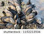 Sea Waves Hitting Wild Mussels...
