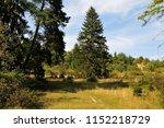 juniper heathland with shrubs... | Shutterstock . vector #1152218729