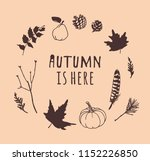 hand drawn autumn illustration... | Shutterstock .eps vector #1152226850