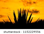 sunset landscape of a tequila... | Shutterstock . vector #1152229556