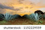 sunset landscape of a tequila... | Shutterstock . vector #1152229559