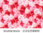 rose background. colorful rose... | Shutterstock . vector #1152258800