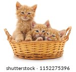 Stock photo three red kittens in a basket isolated on a white background 1152275396