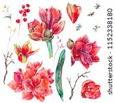 watercolor floral set of red... | Shutterstock . vector #1152338180