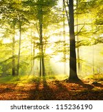 Dawn In Old Beech Forest Poland