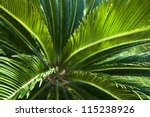 Upper Trunk Detail Of Palm Tree ...