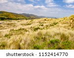 coastal meadow with windblown... | Shutterstock . vector #1152414770