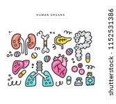 human organs for...   Shutterstock .eps vector #1152531386