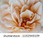 pastel color fine art still... | Shutterstock . vector #1152545159