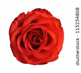 Stock photo red rose isolated on white background 115254808