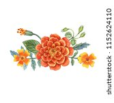 watercolor hand painted flowers.... | Shutterstock . vector #1152624110
